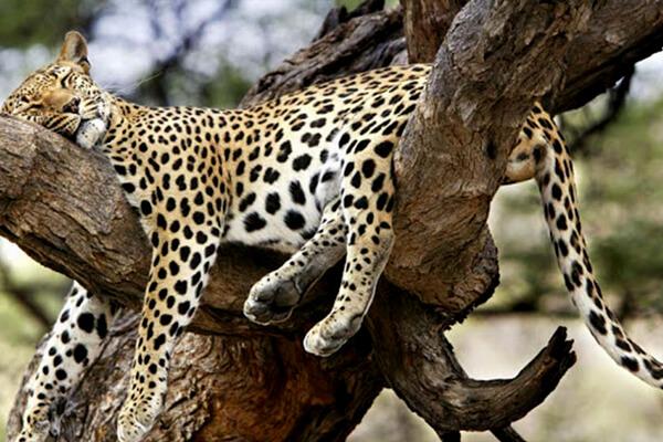 akagera national park, wildlife in akagera national park, rwanda wildlife, rwanda wildlife safaris, uganda wildlife tours, wild in akagera, animals in akagera, akagera game drive, game drives in rwanda, rwanda game drive, rwanda game safari, akagera park rwanda, akagera tours, visiting akagera, camping in akagera, akagera game safari, rwanda animals, zebras in akagera, lions in akagera, elephants in akagera, big five in akagera, hippos in akagera, rhinos in akagera, black rhino in akagera, akagera safaris and tours, crocodiles in akagera, giraffes in akagera, elands in akagera, african parks, rwanda african park, parks in africa, national park in rwanda, african national parks, hyenas in akagera
