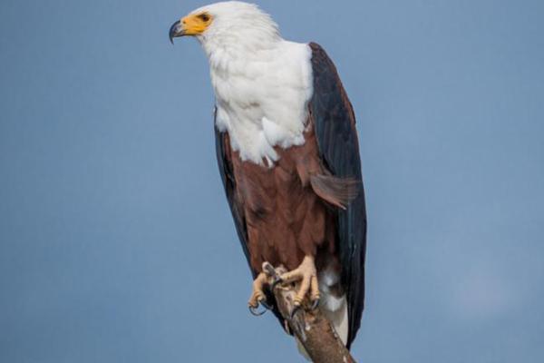 birding in Kigali, birdwatching in akagera, birding in akagera national park, akagera park birds