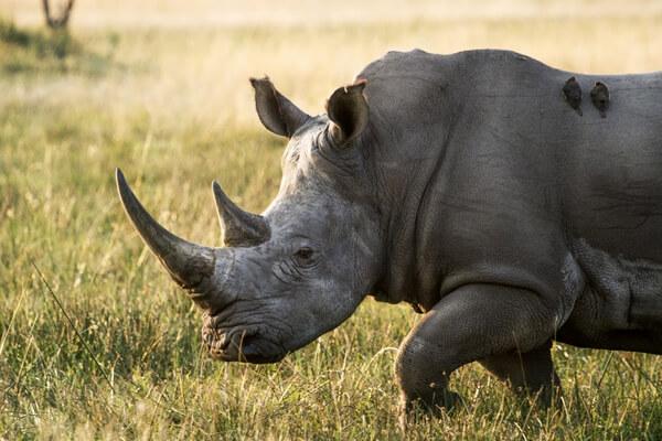 akagera game drive, akagera national park, rwanda wildlife safari, safaris in rwanda, wild safaris rwanda, rwanda safaris, safaris in akagera
